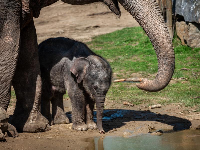 Babyolifantje Tarzen sterft