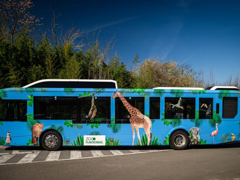 Le ZOO Planckendael opte pour des autobus écologiques au gaz naturel