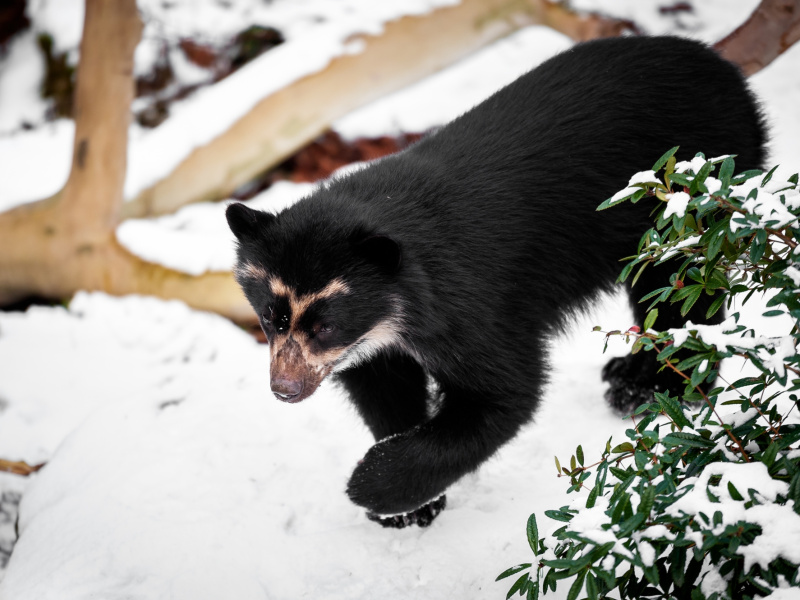 Feeërieke sneeuwbeelden